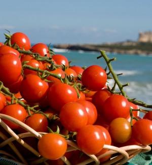 Pomodoro di Pachino, c'è l'ok della Commissione europea: il Datterino è marchio IGP
