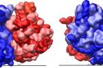 Non solo Dna, scoperto un nuovo regista per aiutare i ribosomi