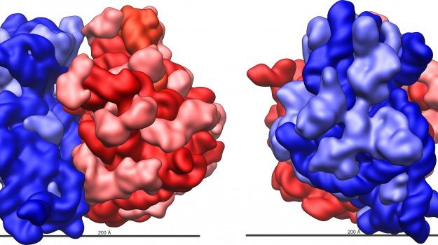 proteine, ribosomi, Sicilia, Società