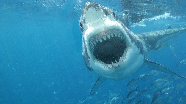 pesca, squali, Sicilia, Società