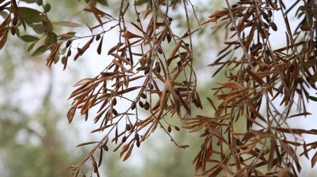 batterio, piante, Sicilia, Società