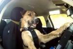 """Monty, Ginny e Porter: ecco una vera """"guida da cani"""" - Il video"""