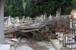 Piogge e forte vento a Palermo, cade un albero al cimitero dei Rotoli: le foto