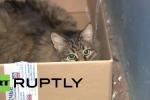 Russia, una gatta randagia scalda e salva un bimbo abbandonato