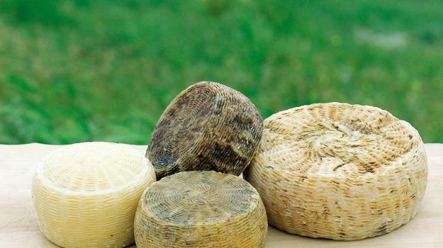 enna, formaggio, pecorino, Enna, Società