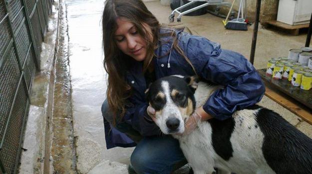 adozione, cani, Sicilia, Società