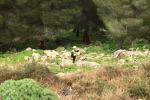 Precipita dal belvedere di Monte Pellegrino: salvato uomo di 60 anni