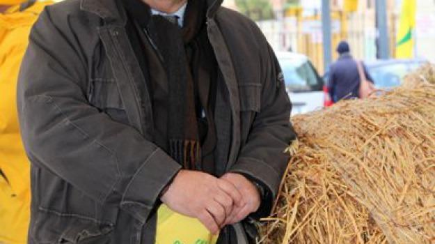 AGRICOLTURA, coldiretti, direttore, Massimo Primavera, Agrigento, Economia