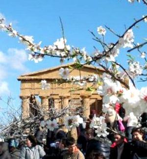 Mandorlo in fiore ad Agrigento, venerdì presentazione dell'edizione 2019