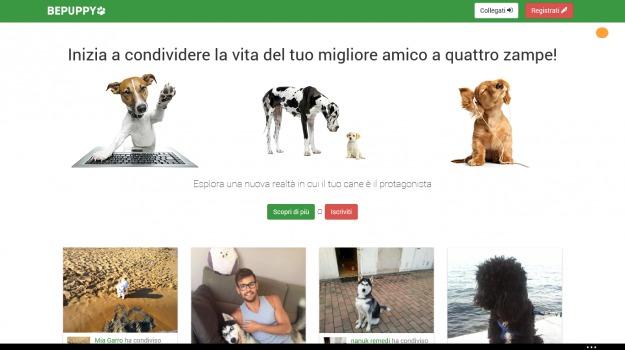 animali, social, Sicilia, Società