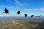 Uccelli, ragionano come mammiferi