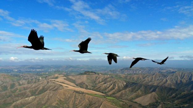 mammiferi, uccelli, Sicilia, Società