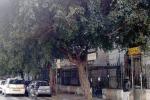 Fronde e rami da potare a Palermo, Piazza Castelnuovo ancora in attesa di un intervento