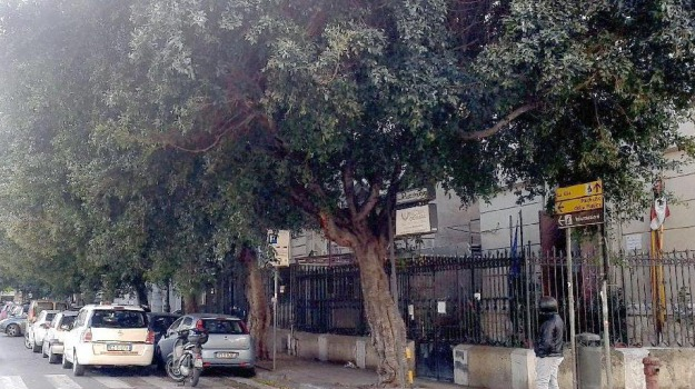 potature, rifiuti, Palermo, Cronaca