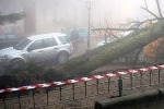 Un albero crolla al suolo davanti alla cattedrale a Enna