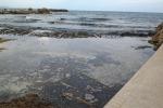 Selinunte, al via la rimozione delle alghe