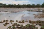 Maltempo, Coldiretti: milioni di danni in Sicilia