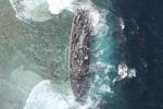 Danni alla barriera corallina, dagli Usa due milioni di dollari alle Filippine