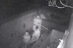Trans ucciso dopo un festino, due nigeriani scoperti attraverso le telecamere di sorveglianza - Foto