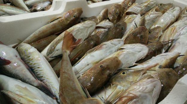 mazara, sequestro di pesce, Trapani, Cronaca