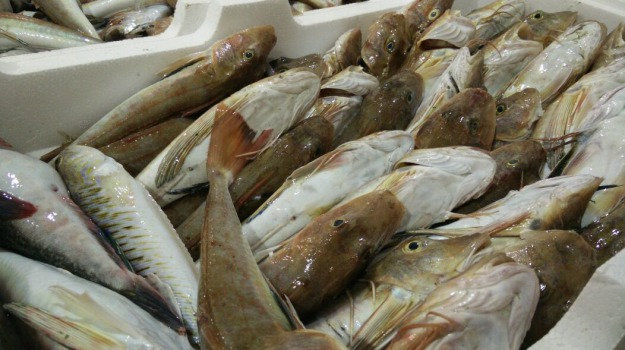 Lampedusa, nave, pesce, Agrigento, Cronaca