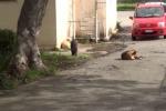 Palermo, randagi davanti all'ospedale Guadagna: le immagini