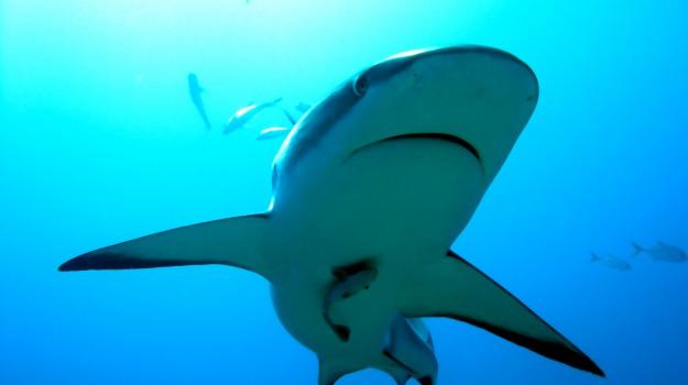 australia, squali, Sicilia, Mondo