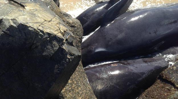 balene, porto, Sicilia, Società