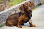Il cane e il suo carattere: le sette razze più difficili da gestire