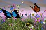Nasce allevamento di farfalle ecosostenibile
