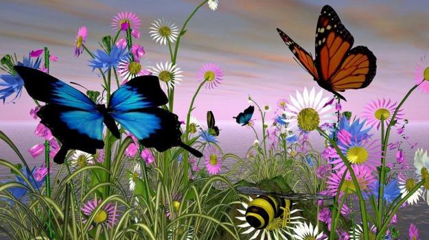 allevamento, farfalle, Sicilia, Società