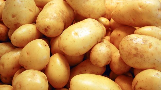 patate transgeniche, USA, Sicilia, Vita