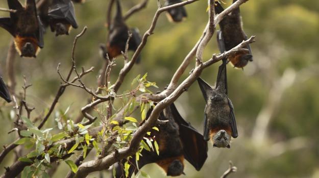 pipistrelli, TRAFFICO, Sicilia, Società