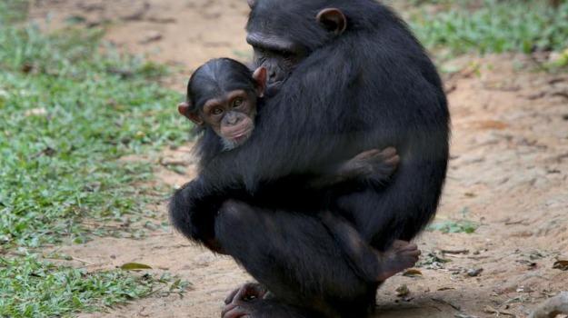 Greenpeace, scimmie, Sicilia, Società
