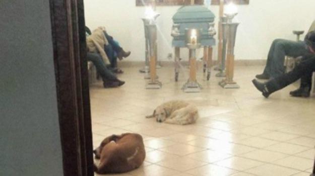 benefattrice, cani, messico, veglia funebre, Sicilia, Mondo