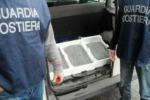 Novellame: 15 denunce tra Palermo, Trapani e Agrigento