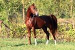 Rubati sei cavalli a Canicattì