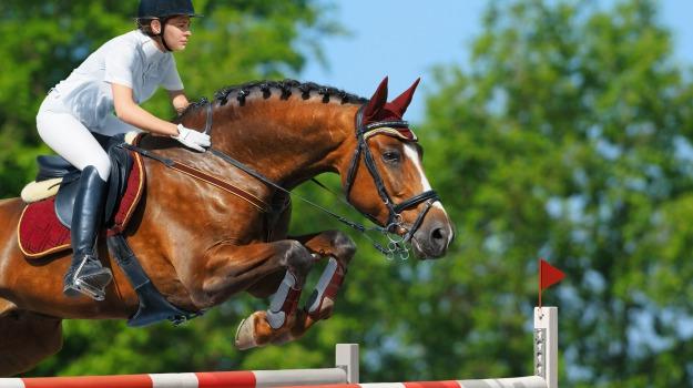 buseto palizzolo, cavalli, ippica, Trapani, Sport