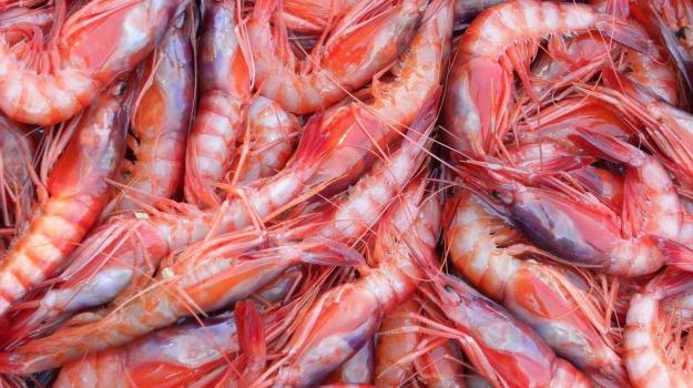 pesce, sequestro, Messina, Cronaca