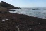 Sciacca, il mare deposita una carcassa di pecora sulla spiaggia - Video