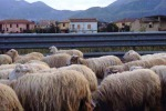 Licata, fienile a fuoco: la polizia salva un gregge di pecore