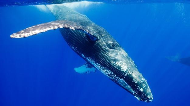 balene, pornhub, porno, Sicilia, Mondo