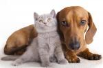 La truffa dei finti funerali per cani e gatti, l'allarme degli animalisti