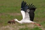 Il paradiso della cicogna bianca, 4 nidi fra Sambuca e S. Margherita