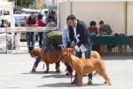 Cani in mostra a Marsala, più di 600 esemplari