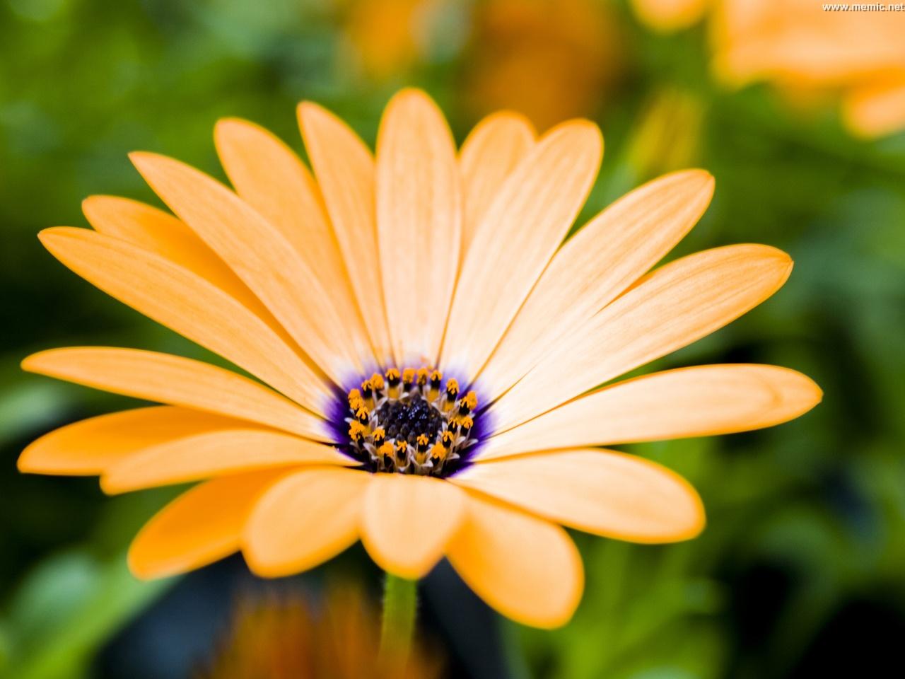 Impollinazione adesso si studia con fiori artificiali for Immagini per desktop fiori