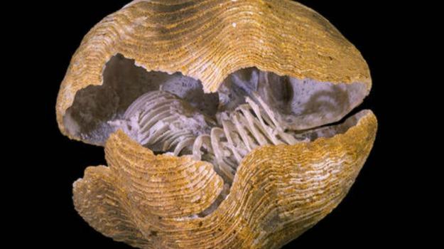 estinzione, fossile, Sicilia, Società