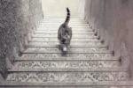 Il gatto sale o scende le scale? Un nuovo gioco impazza sul web