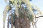 Canicattì, palme pericolose: interventi nelle scuole