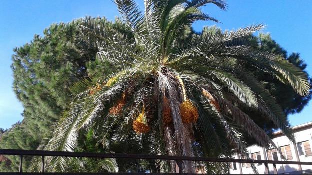 m5s, palme, san cataldo, Caltanissetta, Politica